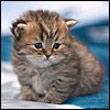 Аватар котик (© Полино4ка), добавлено: 18.11.2008 09:59