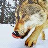 Аватар Волк (© Mirrorgirl), добавлено: 07.02.2009 23:43