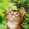 Аватар Красивый кот (© Magbet), добавлено: 09.02.2009 21:03