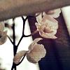 Аватар Цветы (© Mirrorgirl), добавлено: 17.02.2009 11:56