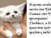 Аватар котёнок (© Feleona), добавлено: 09.03.2009 14:13