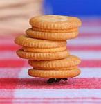 Аватар Трудяга муравей несет печенье (© AvaLife), добавлено: 21.03.2009 20:53