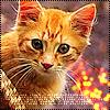 Аватар Рыжий котёнок (© Lintu), добавлено: 21.03.2009 21:14
