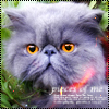 Аватар Персидский котик (© Lintu), добавлено: 21.03.2009 21:23