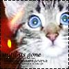 Аватар Котёнок (© Lintu), добавлено: 21.03.2009 21:25