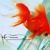 Аватар Золотая рыбка (© Mirrorgirl), добавлено: 26.03.2009 16:50