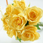 Аватар Желтые цветы (© Radieschen), добавлено: 30.03.2009 14:15