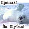 Аватар привет! я шубко! (© Mirrorgirl), добавлено: 04.04.2009 18:25
