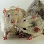 Аватар Мышки