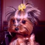 Аватар гламурная собачка (© Radieschen), добавлено: 14.04.2009 12:55