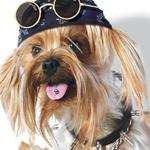 Аватар собака - неформалка (© Radieschen), добавлено: 14.04.2009 13:06