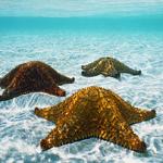 Аватар морские звезды под водой