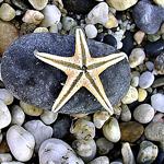 Аватар морская звезда и камни