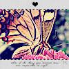 Аватар Бабочка (© Mirrorgirl), добавлено: 22.04.2009 12:05