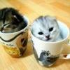 Аватар котики в стакане (© Алюська), добавлено: 22.04.2009 18:03