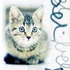 Аватар Котенок, серый котенок