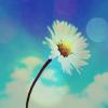 Аватар ромашка на фоне голубого неба (© Mirrorgirl), добавлено: 23.04.2009 14:06