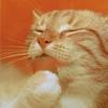 Аватар Рыжий кот умывается, моет лапку (© Mirrorgirl), добавлено: 23.04.2009 14:11