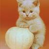 Аватар Маленький беззащитный котеночек (© Mirrorgirl), добавлено: 23.04.2009 14:17