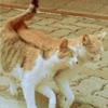 Аватар Влюбленные кот и кошка идут вместе, рядом (© Mirrorgirl), добавлено: 23.04.2009 14:18