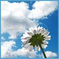 Аватар Цветок на фоне неба (© Ksenya), добавлено: 24.04.2009 17:53