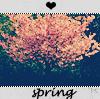 Аватар весна, розовое дерево (© Mirrorgirl), добавлено: 26.04.2009 15:46