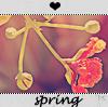 Аватар весна,цветок,почки (© Mirrorgirl), добавлено: 26.04.2009 15:54