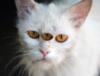 Аватар Третий глаз (© Magbet), добавлено: 29.04.2009 10:51