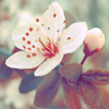 Аватар Белый цветок (© Mirrorgirl), добавлено: 01.05.2009 14:29