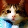 Аватар Грустный котик (© Lintu), добавлено: 02.05.2009 15:48