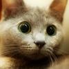 Аватар Испуганный котёнок (© Lintu), добавлено: 02.05.2009 15:52