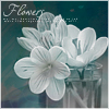 Аватар Белые цветочки (© Mirrorgirl), добавлено: 09.05.2009 12:55