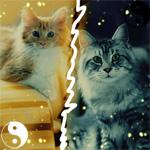 Аватар рыжий котеночек и серая кошка (© Mirrorgirl), добавлено: 09.05.2009 20:49