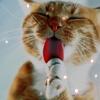 Аватар Кошка моет лапу (© Mirrorgirl), добавлено: 15.05.2009 14:55
