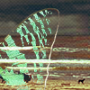 Аватар Крыло бабочки над морем (© Mirrorgirl), добавлено: 17.05.2009 20:14