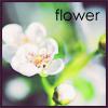 Аватар Цветок, flowe (© Mirrorgirl), добавлено: 20.05.2009 17:06