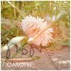 Аватар Помоги (© Mirrorgirl), добавлено: 21.05.2009 13:32