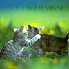Аватар Секреты, две кошки (© Mirrorgirl), добавлено: 24.05.2009 12:31