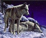 Аватар Волки на снегу (© Anatol), добавлено: 25.05.2009 15:17