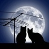 Аватар Кошки на крыше (© Ksenya), добавлено: 29.05.2009 21:46