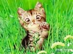 Аватар Смешной котёнок