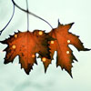Аватар Два кленовых листочка (© Mirrorgirl), добавлено: 30.05.2009 19:55