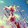 Аватар Весенние цветы (© Mirrorgirl), добавлено: 30.05.2009 19:58