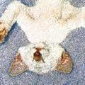 Аватар Ленивый спящий кот (© Radieschen), добавлено: 02.06.2009 13:04