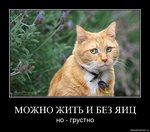 99px.ru аватар Можно жить и без яиц, но... грустно