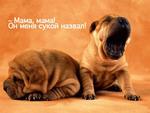 Аватар Мама, мама! Он меня сукой назвал! (© Anatol), добавлено: 05.06.2009 16:28