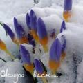 Аватар Скоро весна (© Radieschen), добавлено: 12.06.2009 11:31