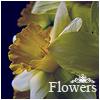 Аватар Цветы,flowers (© Mirrorgirl), добавлено: 14.06.2009 08:58