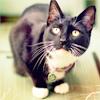 Аватар Черный кот (© Mirrorgirl), добавлено: 14.06.2009 10:32
