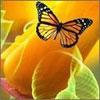 Аватар Бабочка и Цветы (© папайя), добавлено: 14.06.2009 20:15